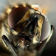 Mikro fotografia - supermakro
