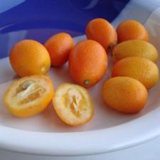 Exotické ovocie II.